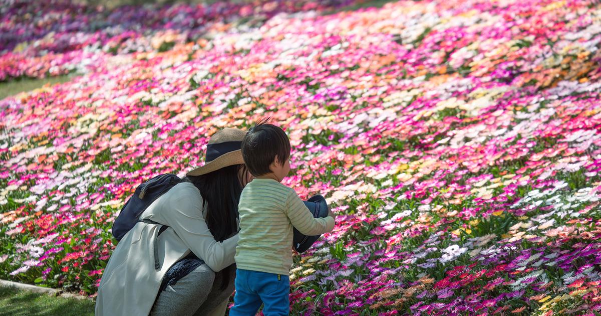 【淡路島】 国営明石海峡公園 で春と花を満喫